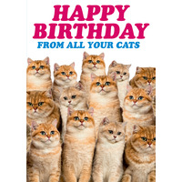 Happy Birthday From All Your Cats Funny Birthday Card