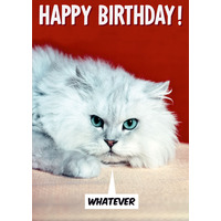 Whatever Cat Funny Birthday Card